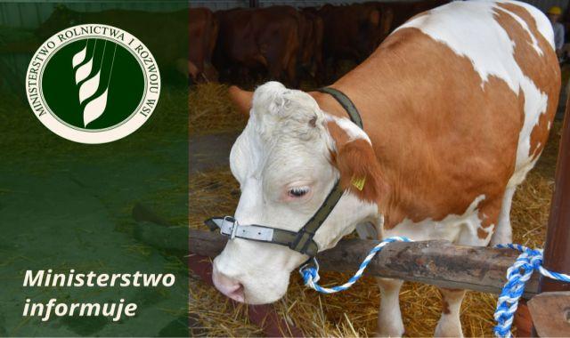 Ilustracja do informacji: Ubój zwierząt gospodarskich kopytnych poza rzeźnią